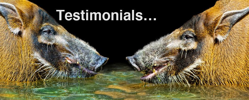 ChangeWise - testimonials