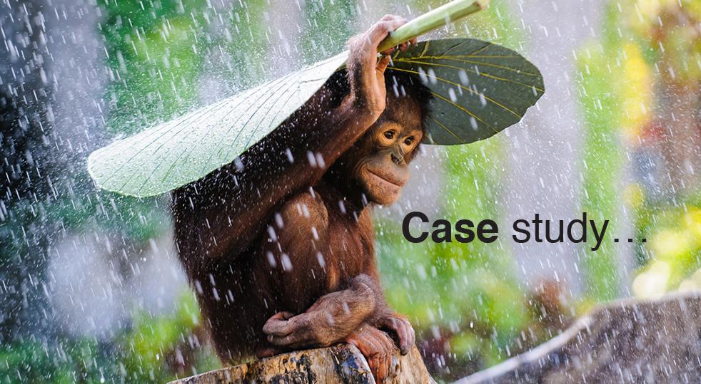 ChangeWise Case Study